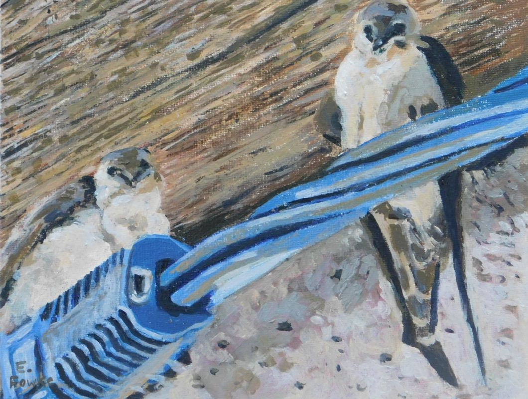 Swallows perched in the eaves of an old French House Cevennes France oil painting